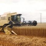 oat harvest